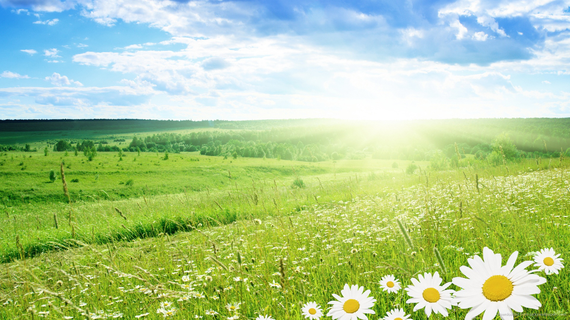 Keep hayfever and allergies under control with our deep carpet cleaning service